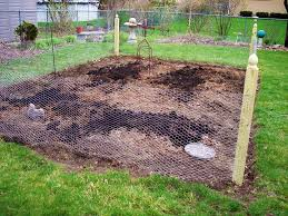 how to keep rabbits out of garden how to protect raised beds from