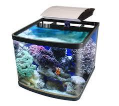 types of koi fish aquarium design ideas