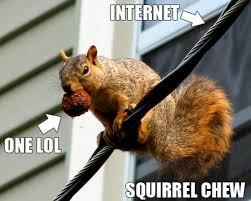 Squirrel Meme - squirrel chew know your meme