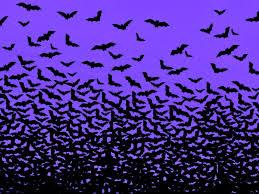 bats wallpapers wallpaper cave