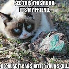 Unamused Cat Meme - 45 best grumpy cat memes images on pinterest cats funny stuff and