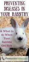 selling angora fiber from backyard rabbits angora rabbit rabbit