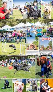 over 1 200 attendees at paws in the park 2015