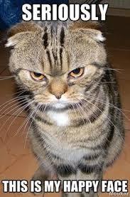 Mad Kitty Meme - laughing at oneself litter box wisdom cat box zen