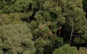 sydney the hills treetops sydney are they human e flux architecture e flux