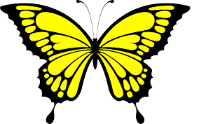 image result for butterfly stuff butterfly and