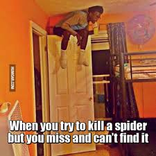Kill Spider Meme - when you try to kill a spider but you miss humoar com