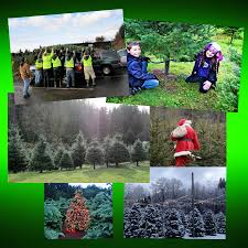 wintergreen tree farm u cut and fresh cut christmas trees