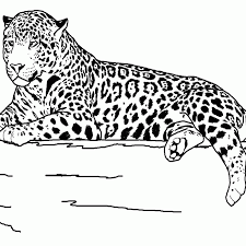 animal coloring pages for teens coloring home