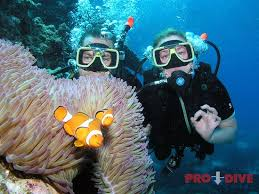 North Dakota snorkeling images Pro dive cairns day trips australia top tips before you go jpg