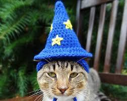 Halloween Costume Cat Pet Costumes Etsy