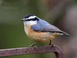 winter bird forecast 2014 u2013 2015 pennsylvania ebird
