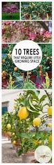 best 25 miniature fruit trees ideas on pinterest dwarf fruit