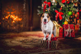 dog christmas 7 ideas on how to spend christmas with your dog top dog tips