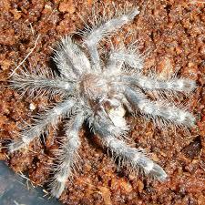 arachnid menagerie gallery