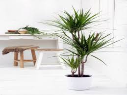 tropical room decor small indoor palm trees indoor plants palm