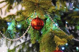 oh christmas tree tips for choosing a tree for the holidays