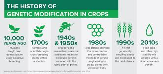 history of the watermelon soybean innovation and technology qualisoy