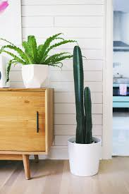 Modern Houseplants by Indoor Plants U2013 A Beautiful Mess