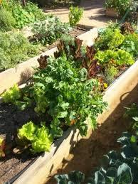vegetable gardening u2013 southwest gardener