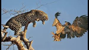 leopard bird in tree