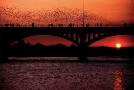 Places To Live In Austin Texas 5 Fun Ways To View Austin U0027s Congress Bridge Bats