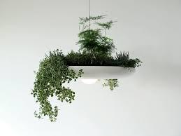design blumentopf grünpflanzen bilder kronleuchter blumentopf design garten