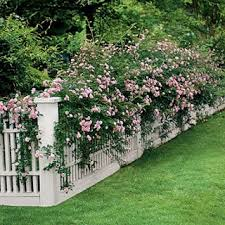 Living Trellis Marie Arden Pink Living White Trellis Work In The Garden