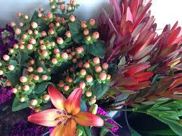 november flowers and fun stuff juniper flowers