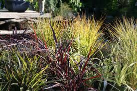 drought tolerant plant nursery gardening supplies and decor