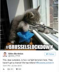 belgians tweet cat pictures during brusselslockdown bbc news