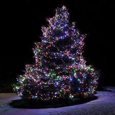 christmas christmas lights outdoor trees photo diy tree light