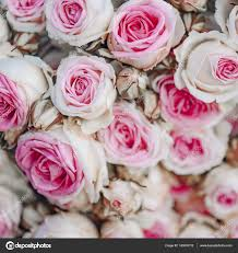 imagenes de rosas vintage fondo de rosas vintage decoración vintage foto de stock