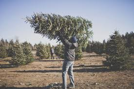 where to cut your own christmas tree in north jersey