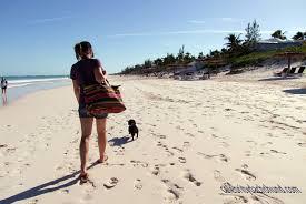 bahamas vacation part 2 crusoe the celebrity dachshund