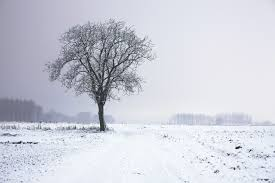 tree in snowy field imagexplorer