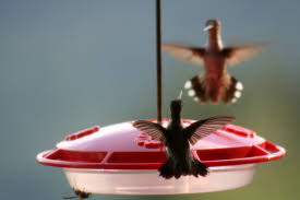 how to keep birds away from patio general hummingbird feeding rules bird watcher u0027s digest