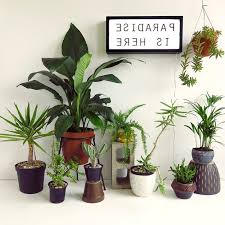 Best Plant For Office Desk Cool Design Ideas Plants For Office Desk Delightful Our Top 7