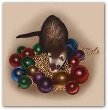 ferrets as pets ferret times