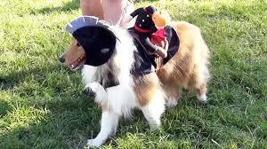 disney u0027s fort wilderness halloween costume pet parade 2015 w star