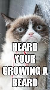 Cat Beard Meme - heard your growing a beard candy cane grumpy cat quickmeme