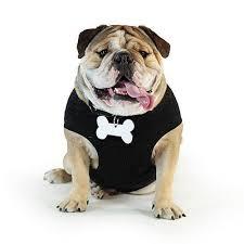 100 halloween costumes bulldogs english bulldog forums