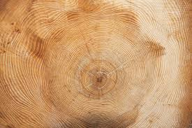 wood tree rings images Tree year annual rings wood free photo on pixabay jpg