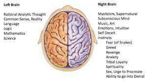 Right Side Human Anatomy On Human Nature Eric R Pianka