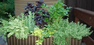 herbs can be grown in same planter u2013 organic container gardening