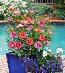 these plants follow pantone u0027s 2017 spring color palette