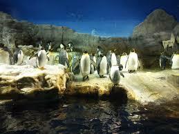 aquarium u2013 alisonvds com