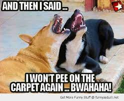 Carpet Cleaning Meme - funny laughing dogs pee carpet pics live your fun