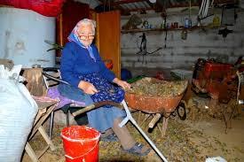 chambre chez l habitant croatie activités 1 jour repas chez l habitant chez zoran 25