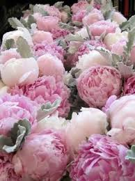 Peonies Flower Perfect Peonies U2022 Tips And Ideas Gardening Pinterest Peony
